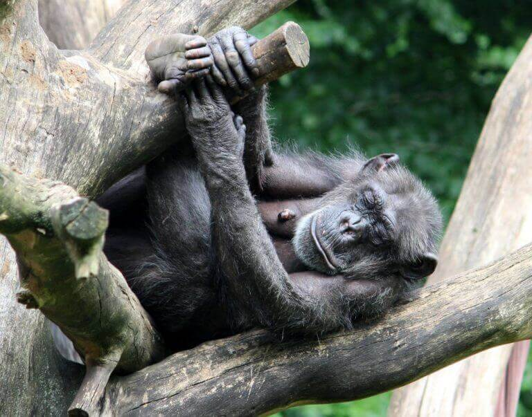 Aalborg zoo abe